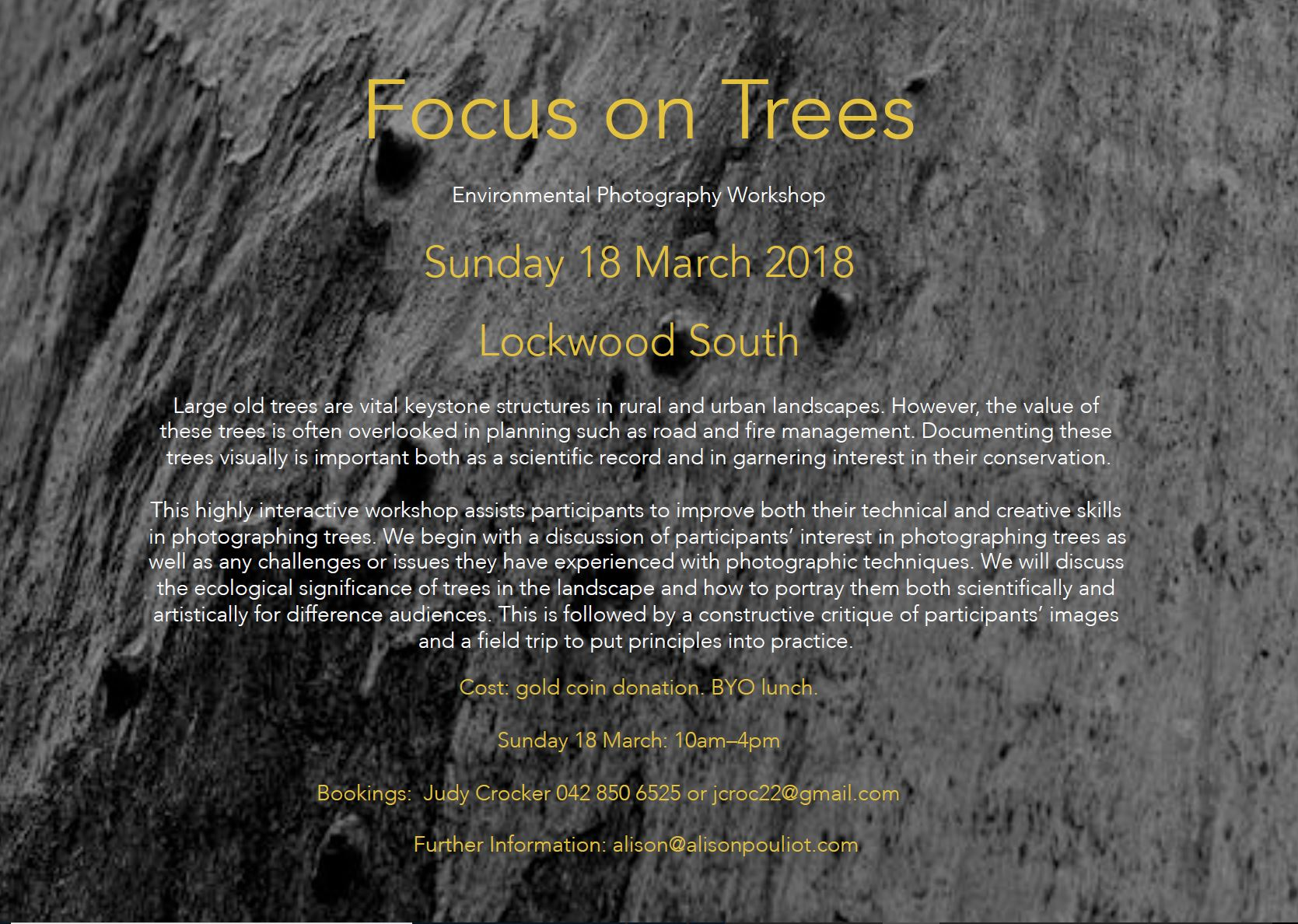 Focus on trees